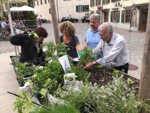 03-urban-gardening-gallusplatz-2017