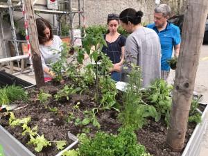08-urban-gardening-gallusplatz-2017