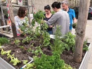 09-urban-gardening-gallusplatz-2017
