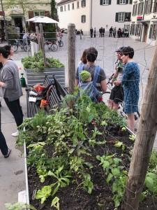 14-urban-gardening-gallusplatz-2017