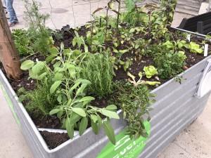 19-urban-gardening-gallusplatz-2017
