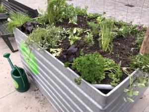 20-urban-gardening-gallusplatz-2017