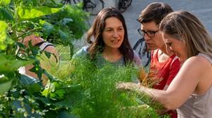 007-Rundgang-Urban-Gardening-Quartierverein-Gallusplatz-2019